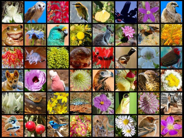 Fauna Flora