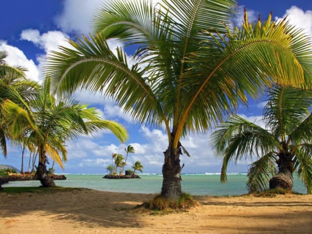 Palm Yağı Nedir? Palm Yağı Ne İşe Yarar?